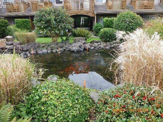Inn at Cannon Beach: Koi filled pond