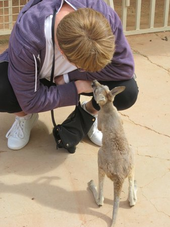 Josephine's Gallery & Kangaroo Orphanage: Adam the Joey at Josephine's