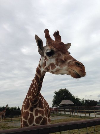 Brights Zoo: Make sure to feed the giraffes