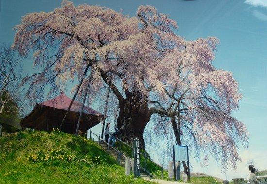 Miharu Dam, Lake Sakura