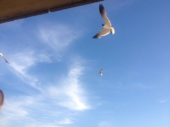 Montego Bay: Do not feed the seagulls lol
