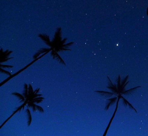 Waimea Plantation Cottages: Stars and coconut tree tops in predawn hours