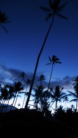 Waimea Plantation Cottages: Coconut Trees during predawn hours