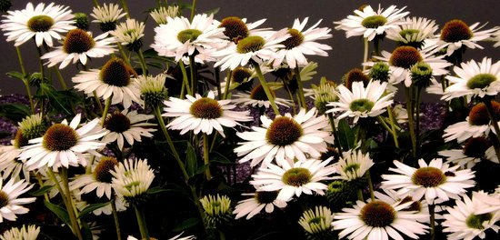 Forest Park de San Luis: More Flowers In October