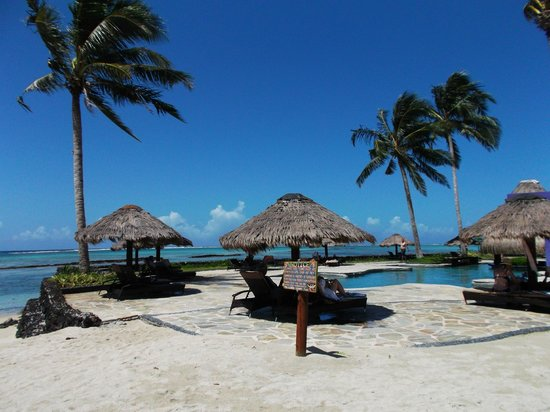 Coconuts Beach Club: The pool area with swim up bar