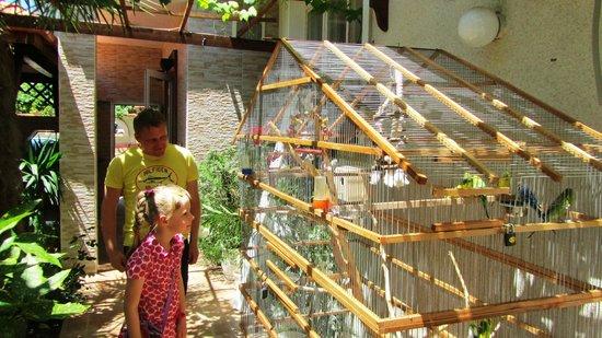 """Sveti Vlas, Bulgaria: большая клетка с попугаями в ресторане """"Котва"""""""
