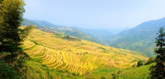 Longji Mountain: Longji Rice Terrace