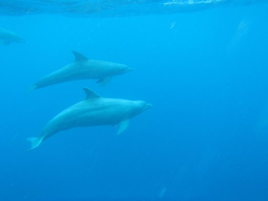 Mayotte Découverte : Les dauphins sous l'eau