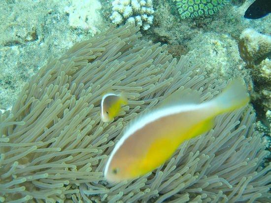 Mayotte Découverte : Sur le tombant