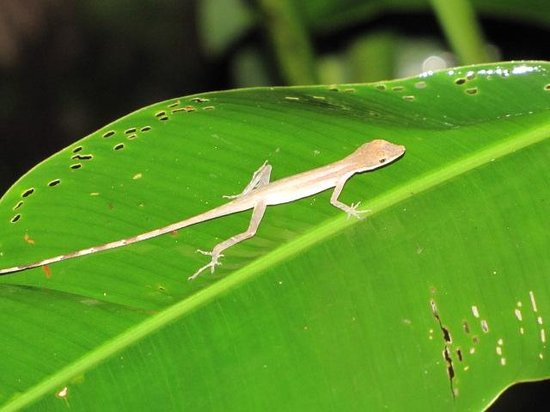 Geckoes Lodge: Little Geckoe
