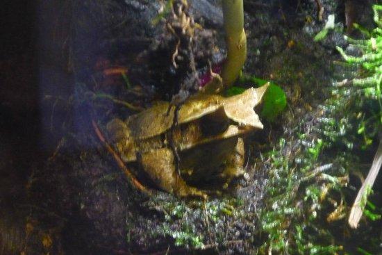 Biotropica la Serre Zoologique : grenouille !