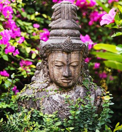 The Damai: front garden