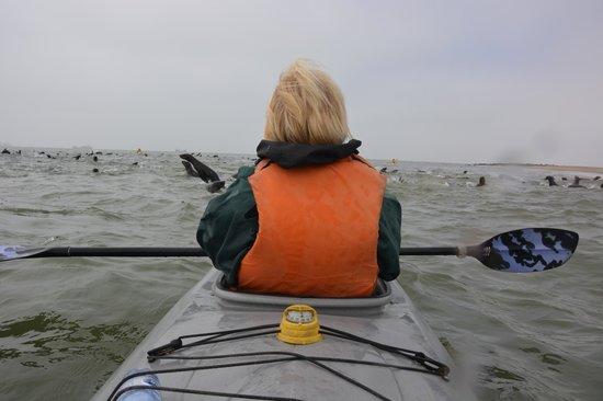 Eco Marine Kayak Tours: Sur l'eau