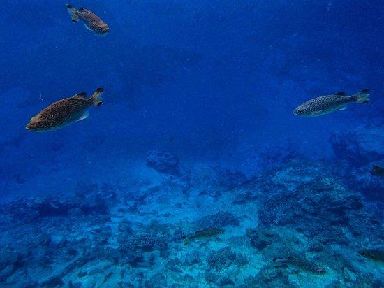 Nanda Blue Hole/Jackie's Blue Hole: blue clear water