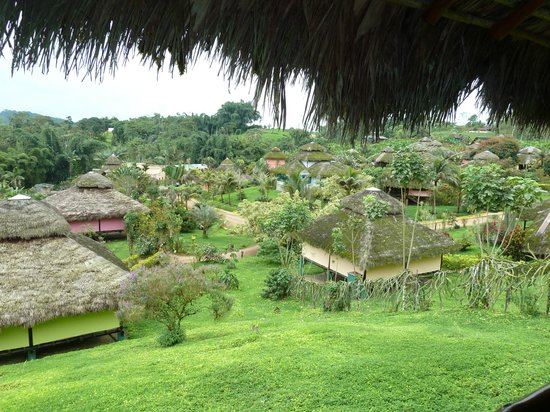 Arasha Tropical Rainforest Resort & Spa: volver volver volver