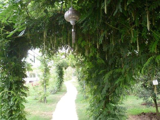 Relais Tenuta San Domenico: Сады в Сан-Доменико