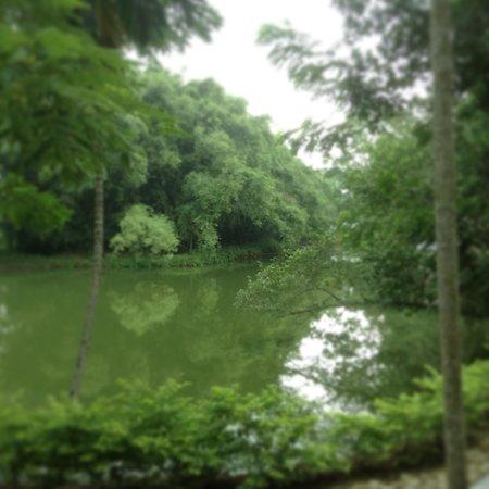 Infinity Resort Kaziranga: The Pond in the Campus