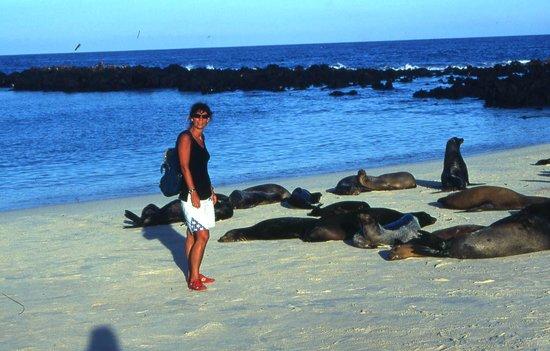 Galapagos Natural Life - Day Tours: sleeping beauties