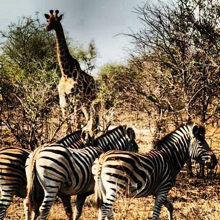 Imbali Safari Lodge: Hanging out with the locals