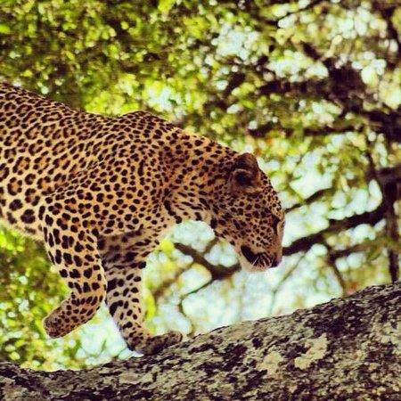 Imbali Safari Lodge: Gorgeous girl!