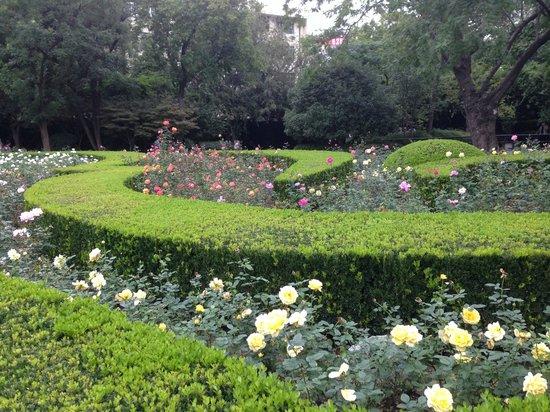 Rose garden in Fuxing Park