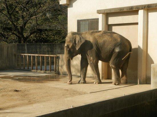 Himeji City Zoo: 姫路市立動物園の写真その2