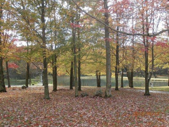 Bear Creek Farm Bed and Breakfast: Fall beauty