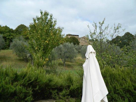B&B CasaSelita: view up olive grove to Orvieto