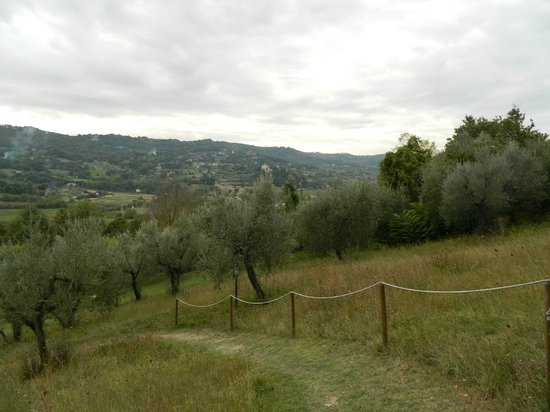B&B CasaSelita: walking up the olive grove