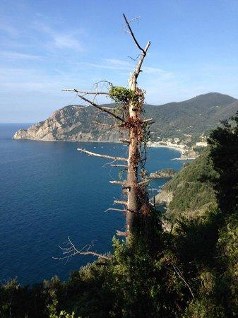 Albergo Marina : On the trail to Vernazza