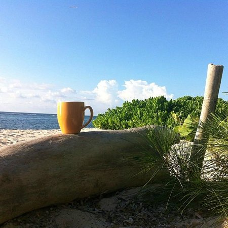 Turtle Nest Inn: Coffee time...