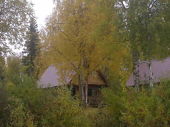 Susitna River Lodging: View of cabin from banks of the Susitna River