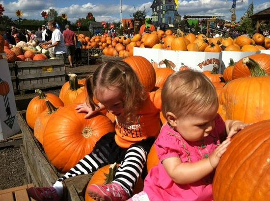 Linvilla Orchards: Fun at Pumpkinland!