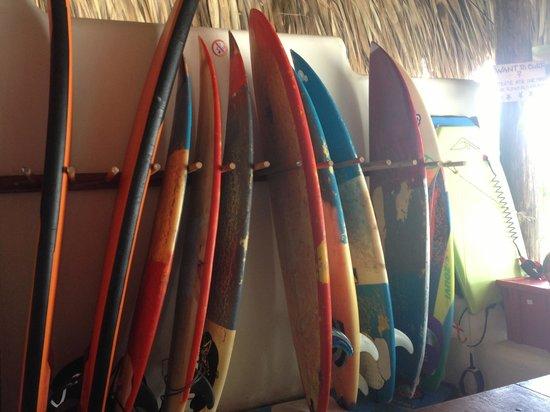 Paredon Surf House : Boards
