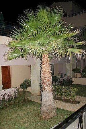 Porto Platanias Beach Resort & Spa: hotellområde
