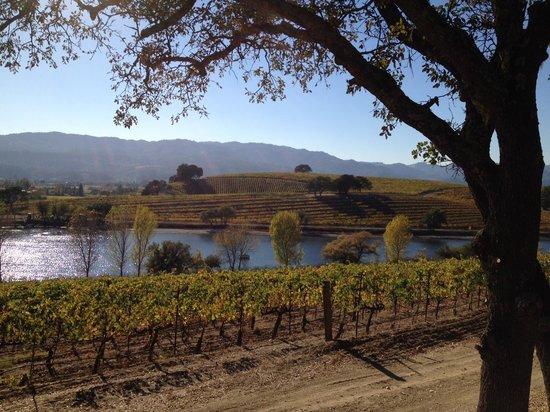 Quintessa Winery: Quintessa Vineyards