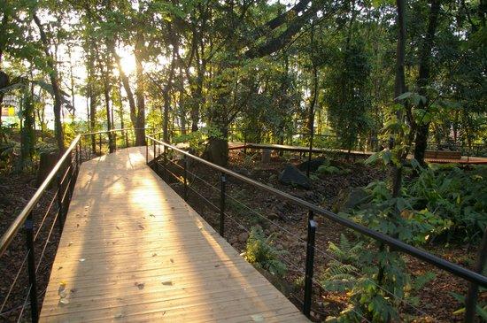 Foto de jardin botanico de medellin medell n sendero del for Jardin botanico tarifas