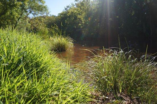 Amara Resort & Spa, a Kimpton Hotel : morning stroll by creek