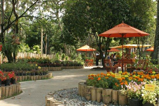 vivero picture of jardin botanico de medellin medellin