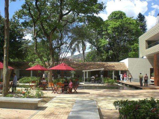 Trees in el orquideorama jardin botanicao de medellin for Bodas en el jardin botanico medellin