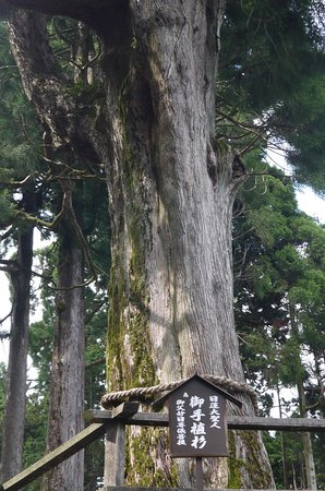 Mt. Minobu Ropeway : 御手植杉