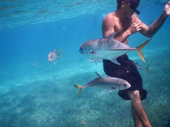 Raggamuffin Tours - Day Tours: I'm sure he had something in his pocket.... or, he's the fish whisperer...