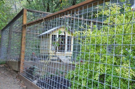 Farmhouse Inn & Restaurant: Chicken coop