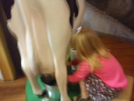 Turkey Hill Experience: more milking