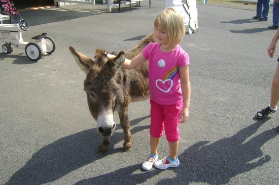 Land of Little Horses: Granddaughter with very friendly donkey