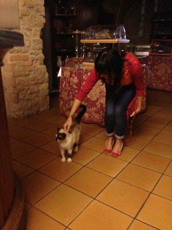 Villa Rioddi: Euro - the cat