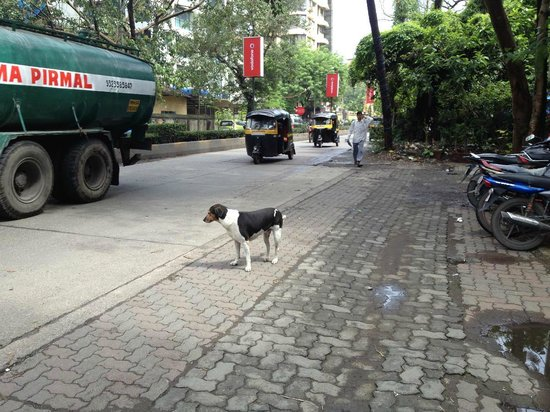 Hotel Bawa Continental : Street infront of Hotel.... The Hotel dog was very healthy and freindly :-)