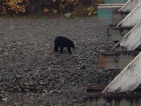 Bear Cove Cottages: Bears are still out and about!