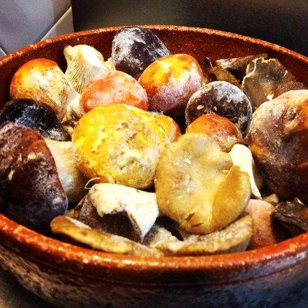 Mandragora: Es otoño y temporada de setas en el Mandrágora tienes los Boletus, las Amanitas cesáreas y las S