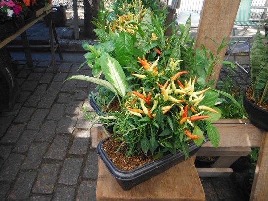 Embu das Artes, SP: Plantas e Flores